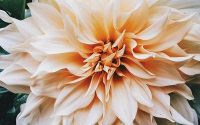 Crescita personale: la psicoterapia con Sandro